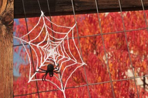 free crochet halloween decorations free crochet cobweb pattern free crochet spiderweb pattern