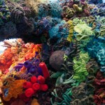 The Hyperbolic Crochet Coral Reef  – A Must See!
