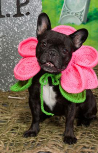Blooming Dog Costume :: Roundup of free crochet pet costumes on Moogly!