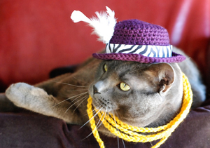 My Pimp Paw is Strong :: Roundup of free crochet pet costumes on Moogly!