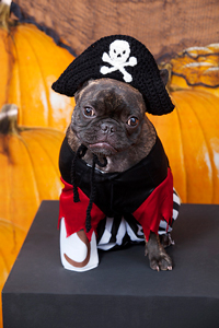 Puppy Pirate Hat :: Roundup of free crochet pet costumes on Moogly!