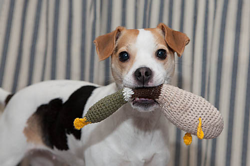 Gone To The Dogs 10 Free Crochet Patterns For Your Pets