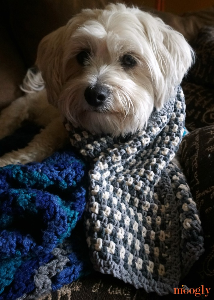 Autumn Amore Scarf - dog