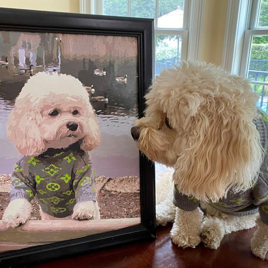 Phototopaintbynumbers_Dog_550x